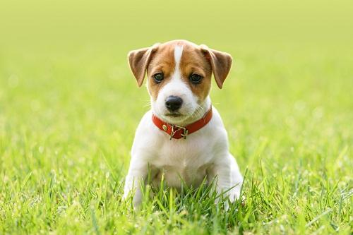 le collier anti aboiement idéal pour son chien